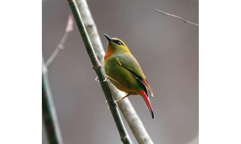 Similarities in species diversity and range in both terrestrial birds and marine bivalves