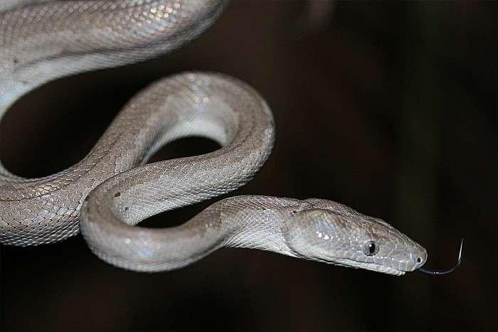 Slithery new species