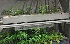 Smart cultivation platform facilitates indoor farming