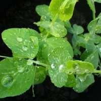 Smart plants learn new habits