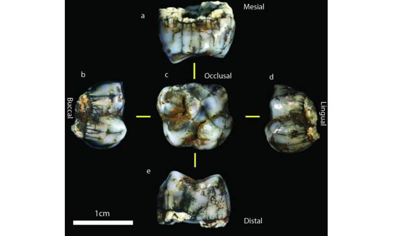 South Africa's Sterkfontein Caves produce 2 new hominin fossils