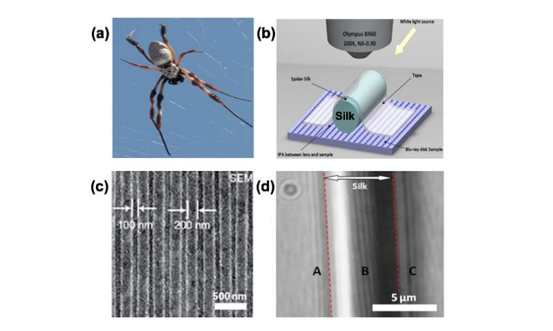 Spider silk: Mother Nature's bio-superlens