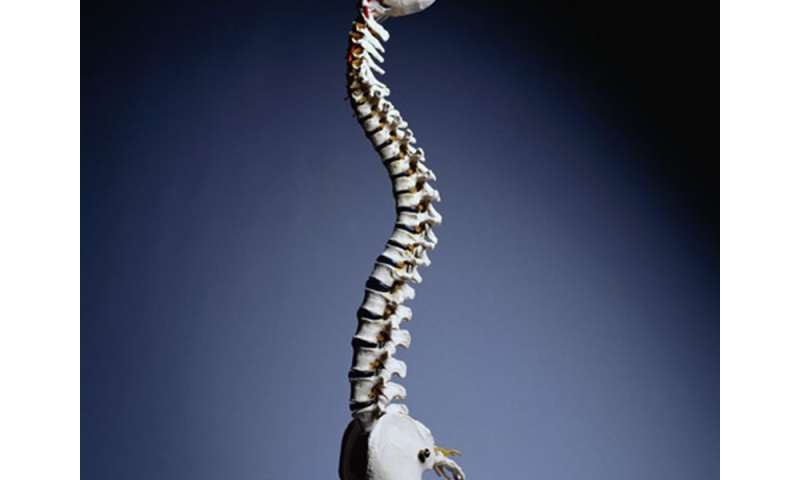 Spinal manipulation offers little low back pain disability relief