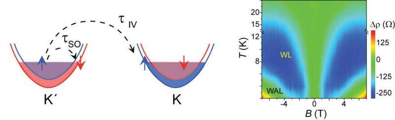 Spin dynamics in an atomically thin semi-conductor