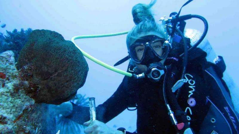Sponges potential 'winners' in the face of climate change