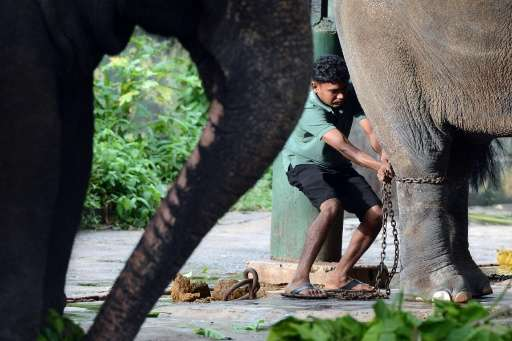 Sri Lankan authorities say more than 40 baby elephants, often the mother is killed in the process, have been stolen from nationa