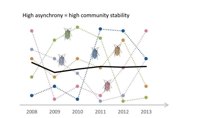 Stability in ecosystems: Asynchrony of species is more important than diversity