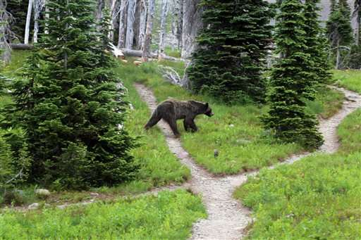 States divvy up Yellowstone-area grizzly hunt
