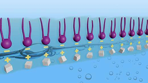 Sticky organic molecules hop aboard oily floaters and may influence the amount of sunlight reflected by marine clouds