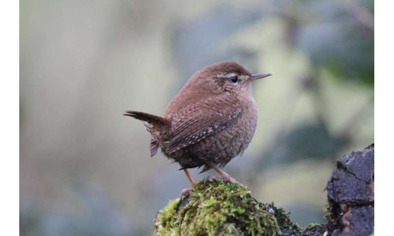 Strong effects of climate change on common bird populations in both Europe and the USA