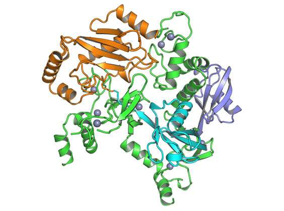 Structure of protein complex that plays key role in modulating immune system revealed