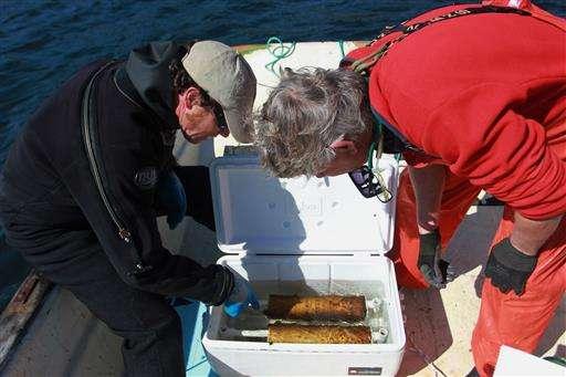 Studies testing kelp as local fix for acidifying seawater