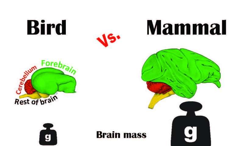 نتیجه تصویری برای bird brain