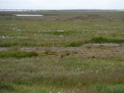 Study of tundra soil demonstrates vulnerability of ecosystem to climate warming
