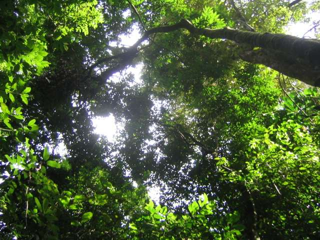 Study reveals deep ties between diverse tropical rainforests