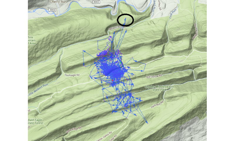 Study uses GPS to explore deers' relationship with the forest