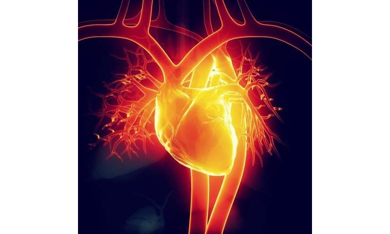 Sub-set of stem cells found to minimize risks when used to treat damaged hearts