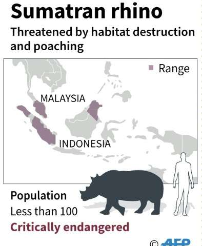 Sumatran rhinos have very long pregnancies that last about 16 months