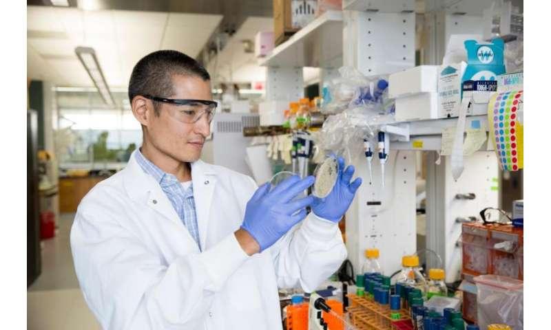'Super yeast' has the power to improve economics of biofuels