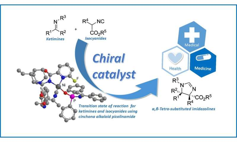 Synthesis of complex molecules displaying potential biological and catalytic activity