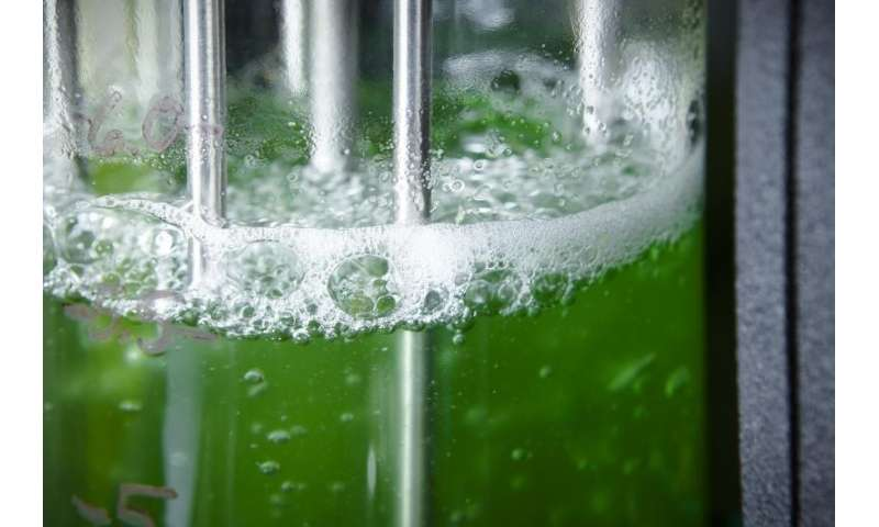 Tapping the unused potential of photosynthesis