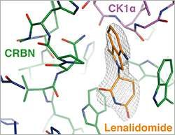 Targeting cancer proteins for degradation