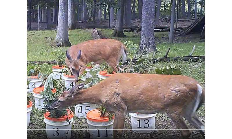 Taste test? Deer preferences seem to help non-native invasive plants spread
