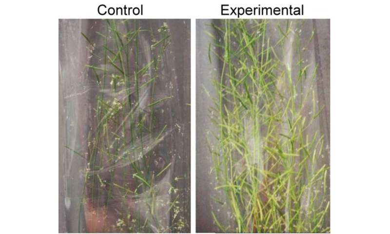 Team discovers a new plant growth technology that may alleviate climate change and food shortage