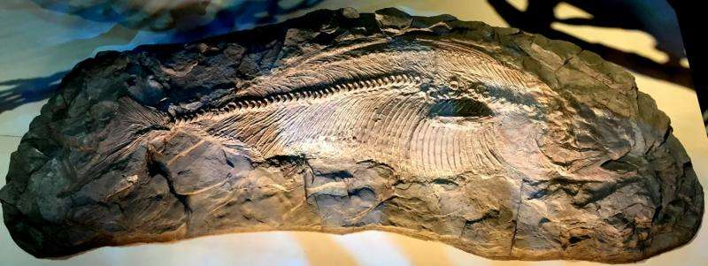 Texas fish of dinosaur era, at Perot Museum of Nature and Science, found to be new species