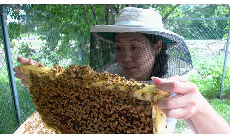 That stings: Insecticide hurts queen bees' egg-laying abilities