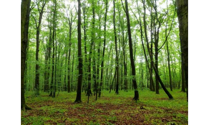 The diversity and number of soil animals determine leaf decomposition in the forest