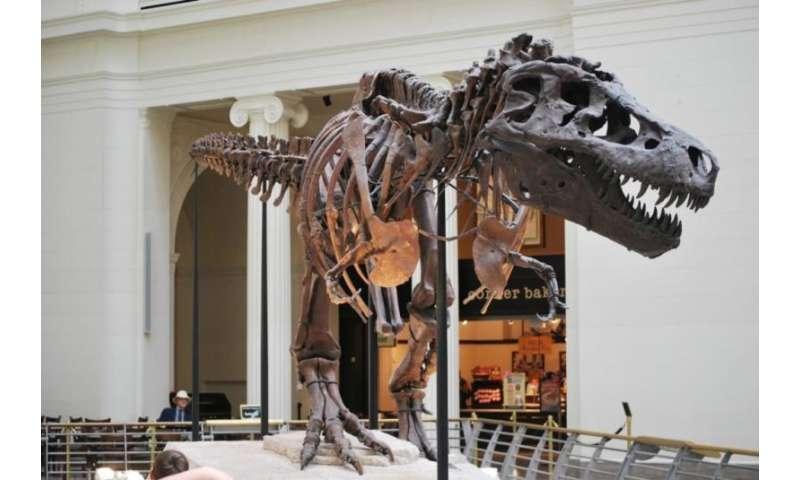 The evolution of tyrannosaurs