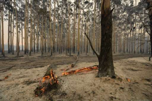 The fire has entered its fifth day and destroyed 143 properties, including 128 homes in the historic mill town of Yarloop, south