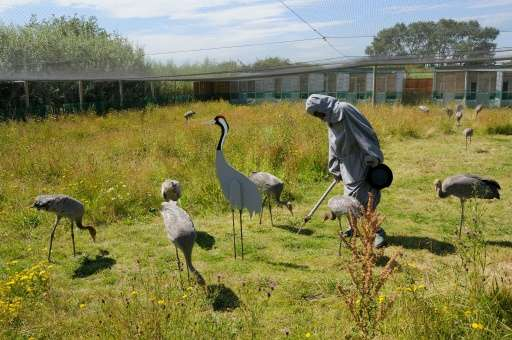 The Great Crane Project is a partnership between the RSPB, the Wildfowl & Wetlands Trust and the Pensthorpe Conservation Tru