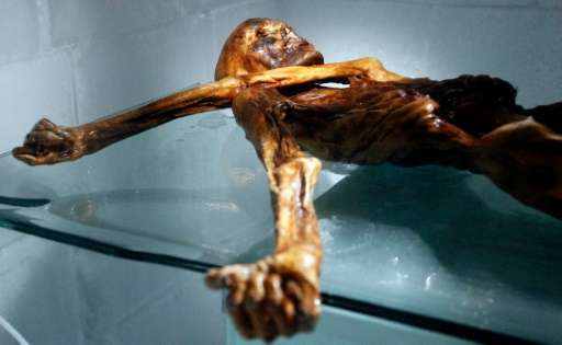 The mummy of an iceman named Otzi, discovered in 1991 in the Italian Schnal Valley glacier, is displayed at the Archaeological M