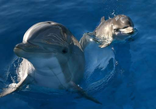 The National Aquarium in Baltimore has decided to transfer its dolphins to a marine sanctuary - a protected coastal habitat, whe
