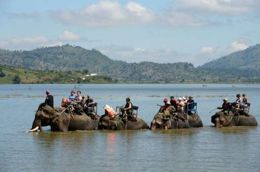 There are fewer than 100 elephants left in the wild in Vietnam and just 80 or so in captivity, mostly used to ferry tourists aro