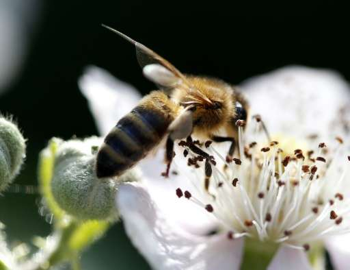 There are some 20,000 species of bees responsible for fertilising more than 90 percent of the world's 107 major crops