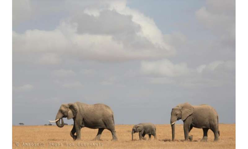 The reproductive and survival benefits of mothers and grandmothers in elephants