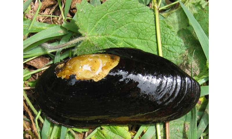 The status quo on Europe's mussels