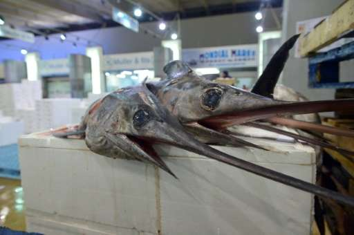 The swordfish species as a whole is not threatened but its Mediterranean sub-group is overfished having fallen an estimated two-