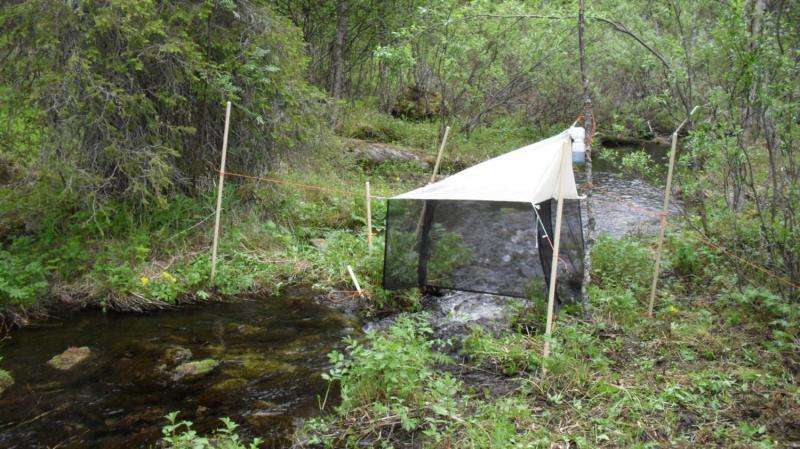 The tip of an iceburg: Four new fungus gnat species from the Scandinavian north