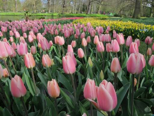The world's largest bulb garden, which boasts some seven million flowers, has depicted in flowers this year's theme of the Nethe
