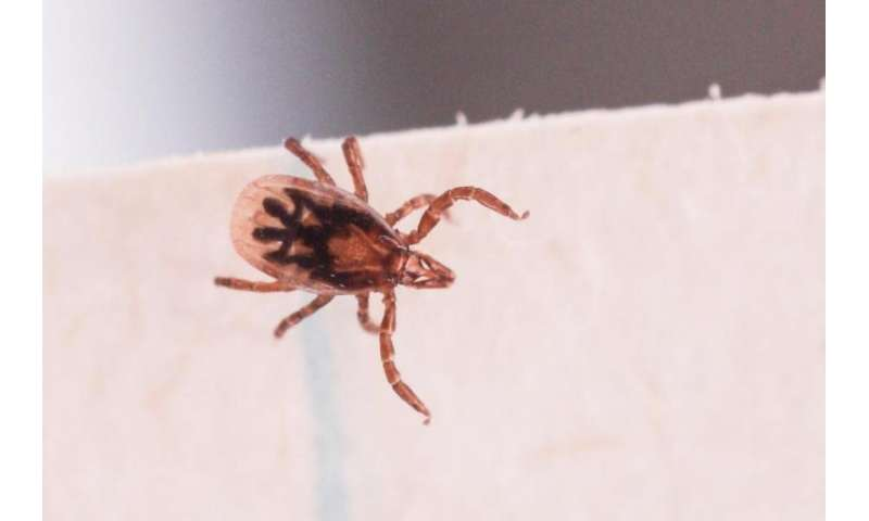 Tick genome reveals inner workings of a resilient blood-guzzler