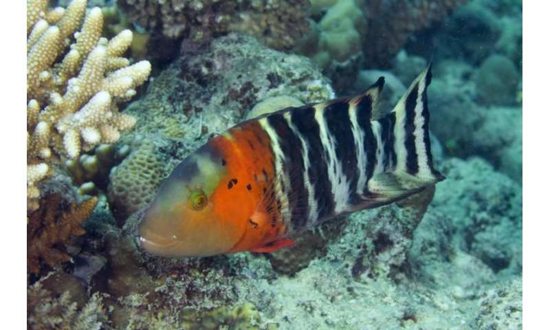 Tough times for the tree of life on coral reefs
