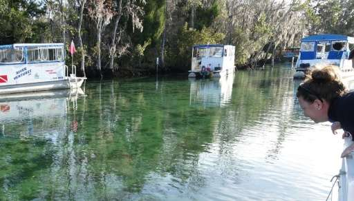 Tourist Brandy Pounds looks out for endangered manatees in Crystal River, Florida
