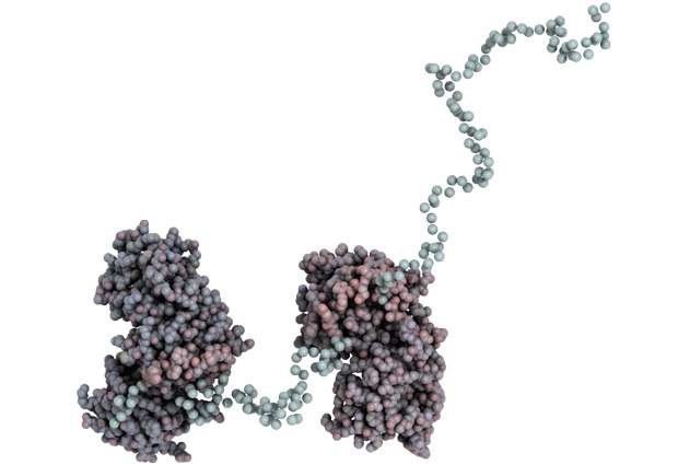 Toxoplasma's balancing act explained
