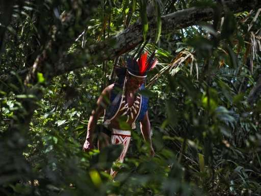 Traditional indigenous lands tend to be particularly precious because they make up less than one quarter of the Earth's land sur