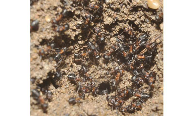 Trapped in a nuclear weapon bunker wood ants survive for years in Poland