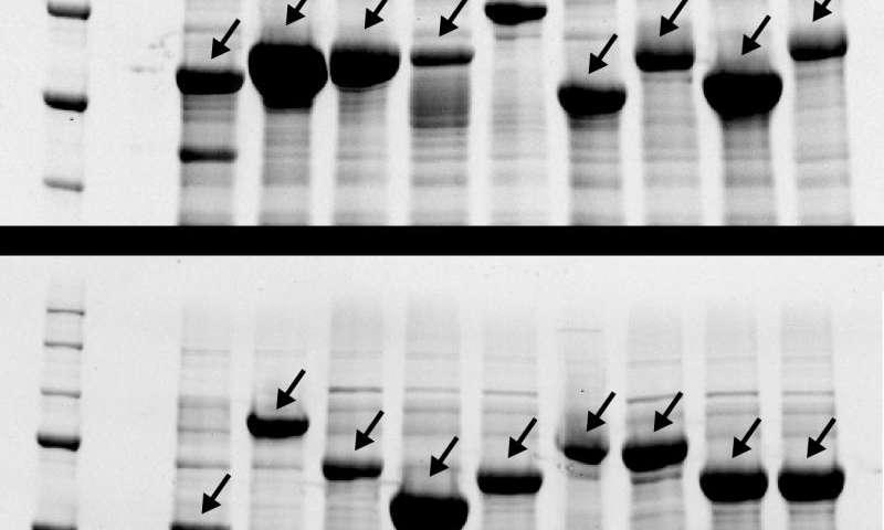Traveling salesman uncorks synthetic biology bottleneck